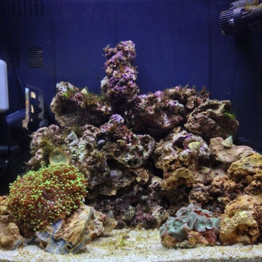 Nano Reef Tank Day 16 Saturday