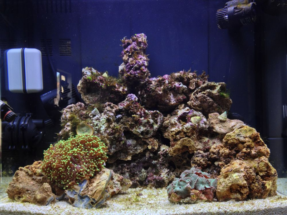 nano reef tank day 16. Black Bedroom Furniture Sets. Home Design Ideas