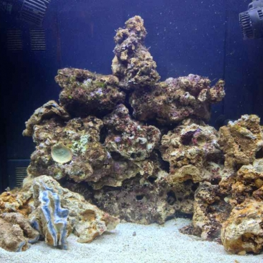 Kent Nano Reef Tank Day 8 Saturday 13-10-12